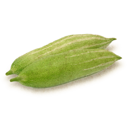 Gourd - Snake