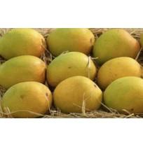 Organic Alphonso Mango Pulp