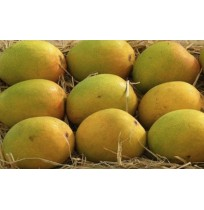 Mango - Alphonso (3-4 days to ripen)