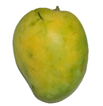 Mango - Banganapalli (Will ripen in 3-4 days)