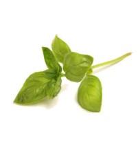 Basil (Fresh)