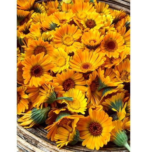 Seeds - Calendula Orange Flower