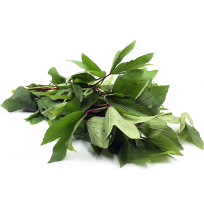 Gongura Leaves Bunch (Sorrel)