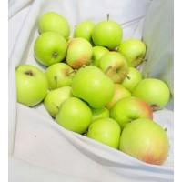 Green Apples (from Simla) - will turn yellow