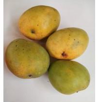 Mango - Banganapalli (Award Winning Mangoes from HB Farm)