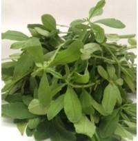 Basalle Soppu (Sambar Cheera/ Ceylon Spinach)