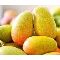 Mango - Imam Pasand  (will take 3-4 days to ripen)