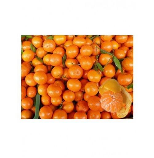 Mini Mandarin Orange