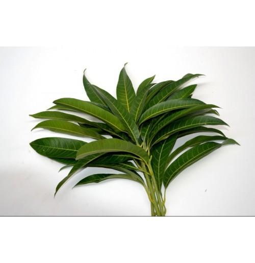 Mango Leaf Bunch