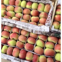 Organic Apples - Mishri