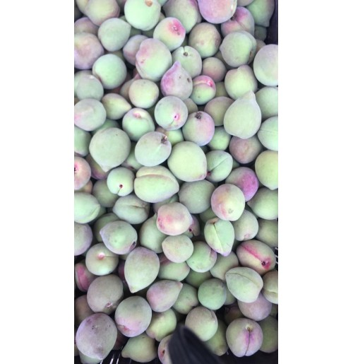 Peaches (Local Variety, Pinkish)