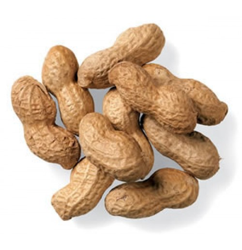 Fresh Groundnut with Shell