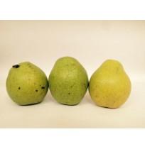 Water Pear (from Kodai Hills)