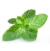 Pudhina (Mint)1 Bunch