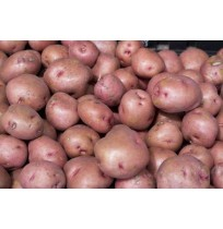 RED Potato (from MP)