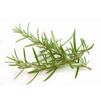 Rosemary (50g packed in a plastic ziplock)