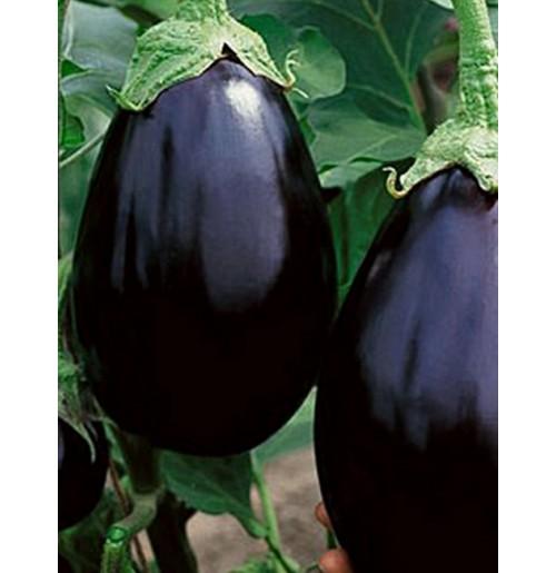 Seeds - Black Beauty Eggplant