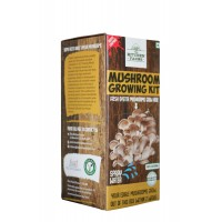 Oyster Mushrooms - Grow from the box within 2 weeks (plus Recipes)