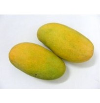 Mango - Amrapali