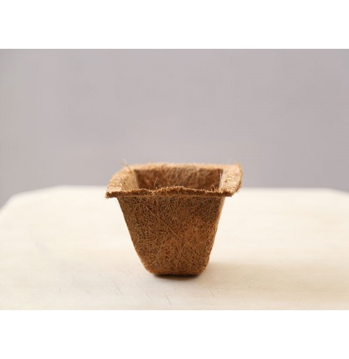 Coco Spanish Cup (small)