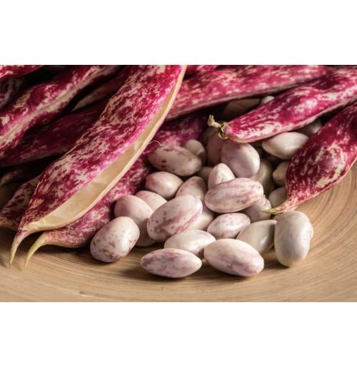 Cranberry Beans ( Borlotti Beans )