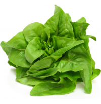 Lettuce - Deer Tongue