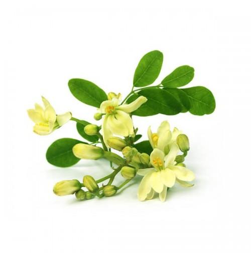 Moringa (Drumstick) Flowers (250gm)