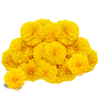 Marigold Flowers for Pooja and Decoration (250gms)