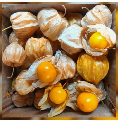 Golden Berry ( Rasbhari/Cape gooseberry/Inca berry , 200gms Box)