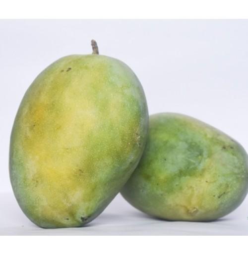 Mango - Gudhadath (from Kerela, Big sized)