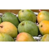 Mango - Kalapad