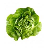 Lettuce - Butterhead