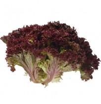 Lettuce Lollo RED