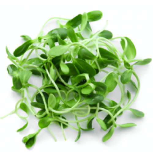 Micro Greens - Fenugreek / Methi (50gms, Harvested)