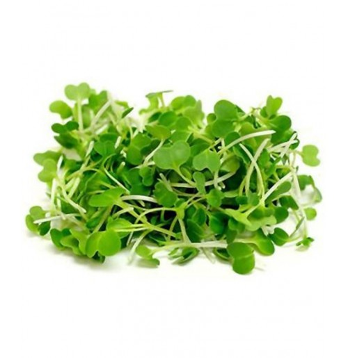 Micro Greens - Pak Choi (50gms, Harvested)