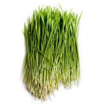 Wheatgrass (100gms, Harvested)