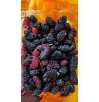 Mulberry ( from Mahabaleshwar, delicate fruit, expect liquid oozing out)