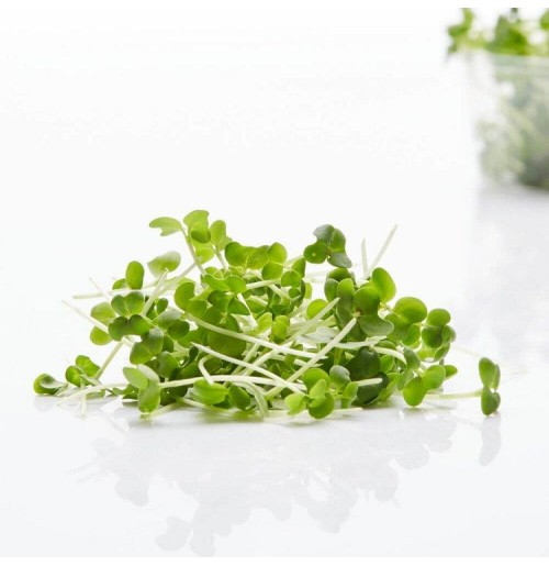 Micro Greens - Mustard (50gms, Harvested)