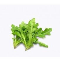 Lettuce Oak Leaf