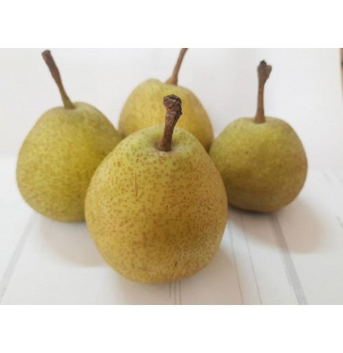 Pear from Jammu (Hardy Skin)