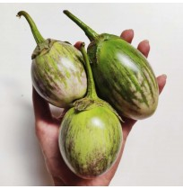 Brinjal (natti, greenish-purple)