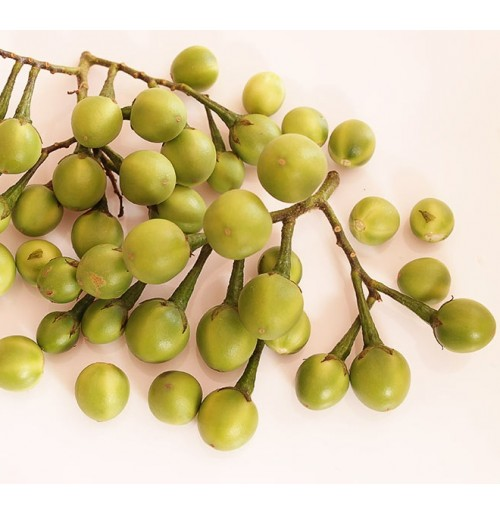 Turkey Berry (Sundakkai)