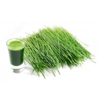Wheat Grass (will be packed in plastic zip lock)