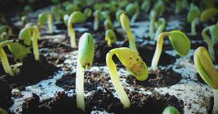 Guide to Seed Germination