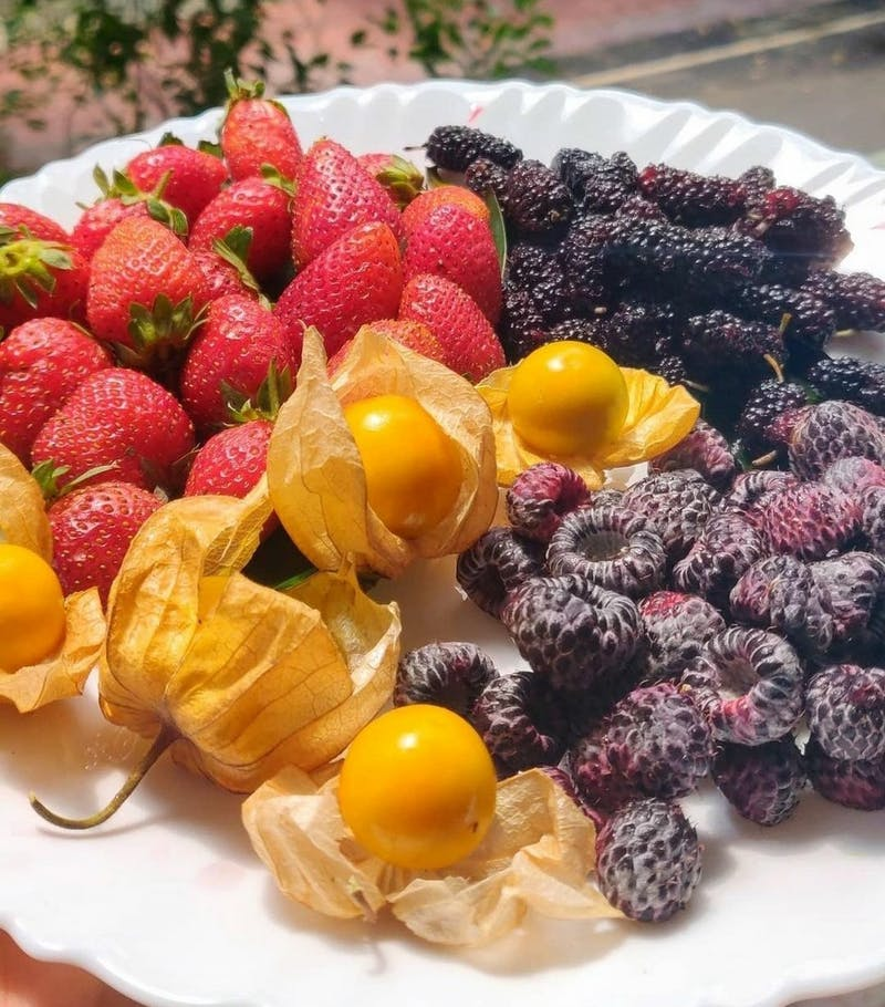 Are what we call berries, actually berries ?